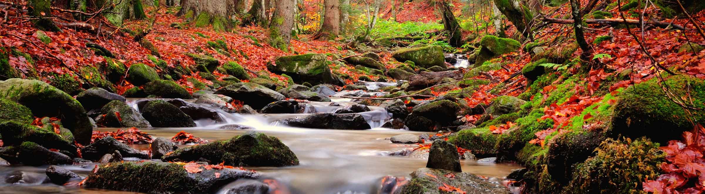 river in the fall with moss rocks